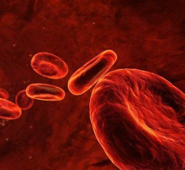 آموزش شبیه سازی رگها و سلولهای خون