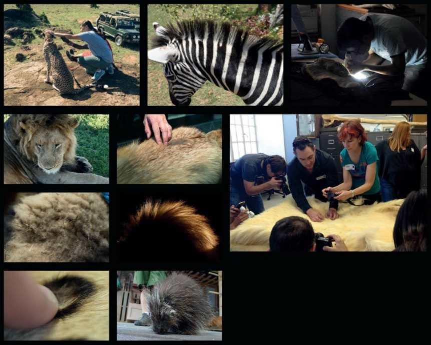 کتاب الکترونیکی هنر زوتوپیا The Art of Zootopia